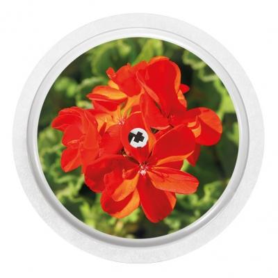 2x Flower Red